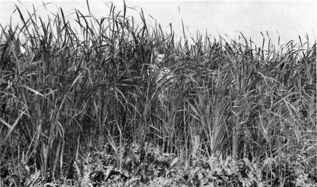 Na het droogvallen van de Noordoostpolder in 1942 raakte de polderbodem bedekt met moerasandijvie en manshoog riet waartussen mensen zich goed konden verbergen.